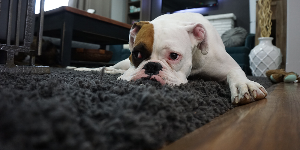 Choosing The Best Vacuum For Dog Hair