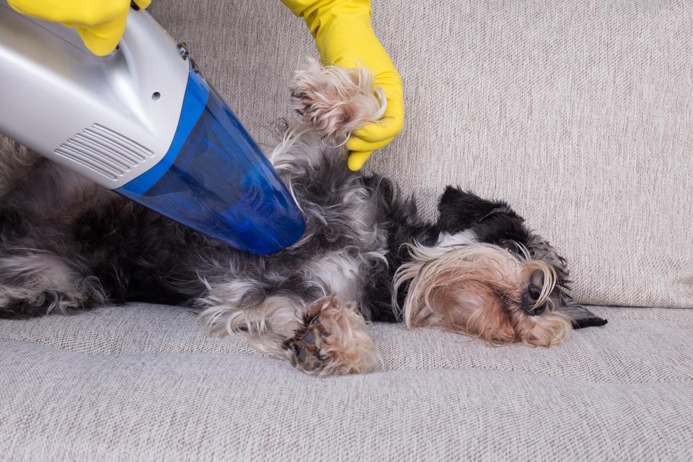 Best Handheld Pet Vacuums – Pet Hair