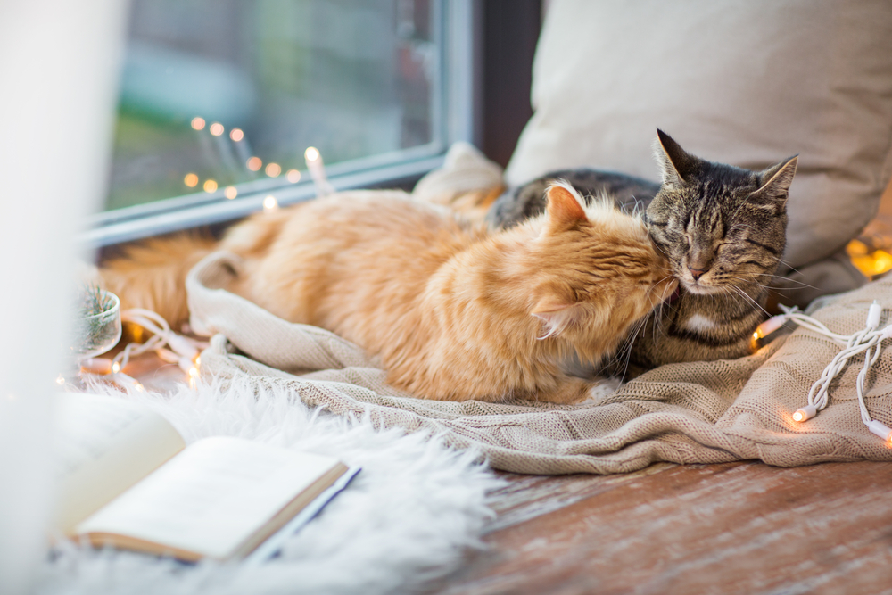 Tips For Keeping A Clean Home With Multiple Cats
