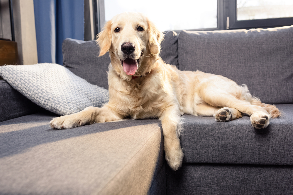 Tips For Removing Pet Hair From Upholstery