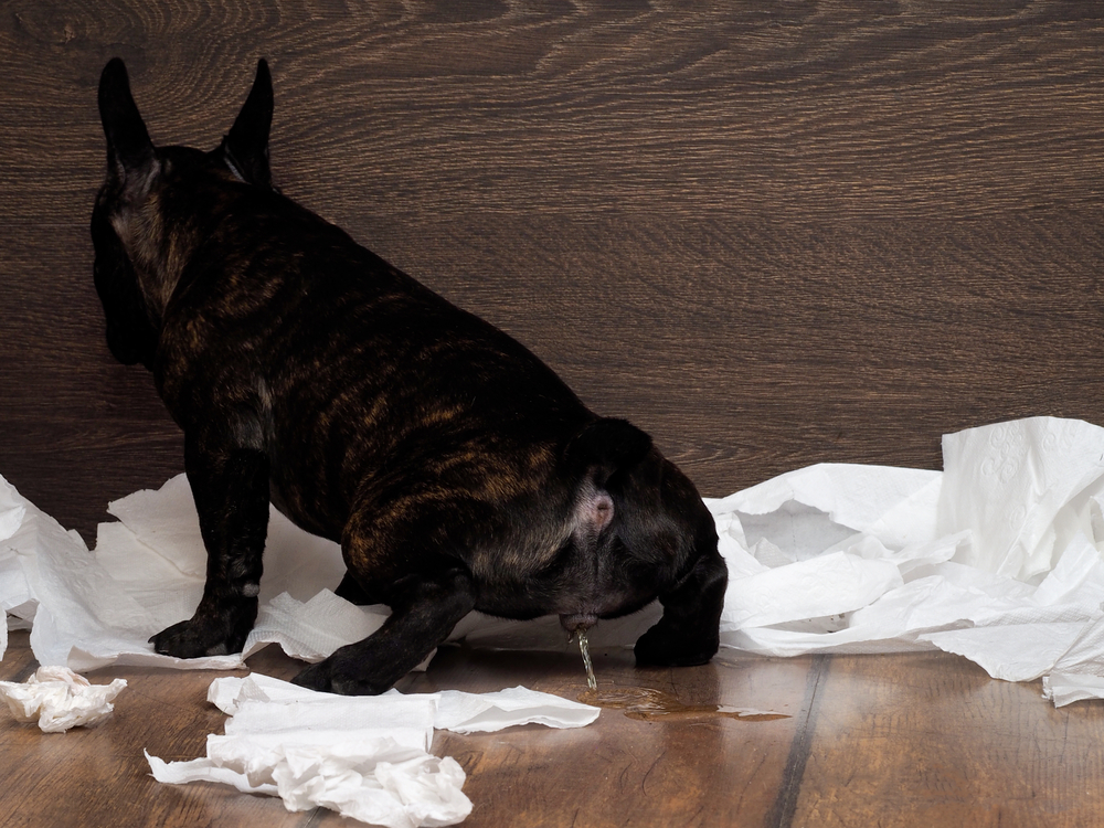 Best Ways To Clean Dog Urine On Wood Floors