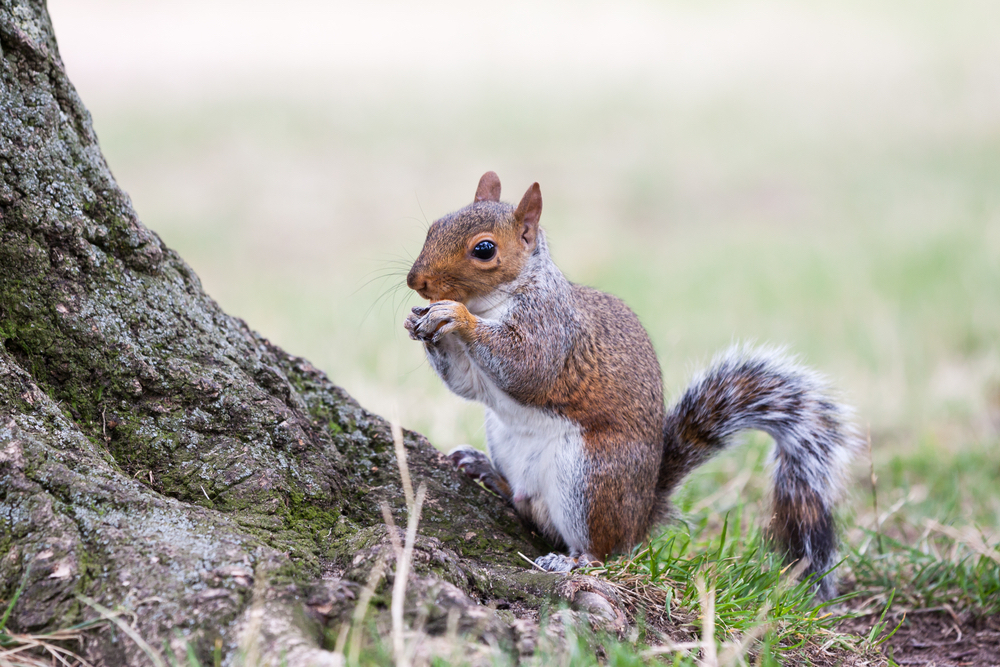 How to keep squirrel out of garden